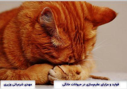 Benefits of Sterilization in pets