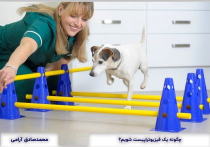How to become Veterinary Physiotherapist