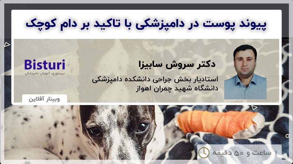 Skin Grafting in Veterinary Medicine With an Emphasis on Small Animals - DR Soroush Sabiza