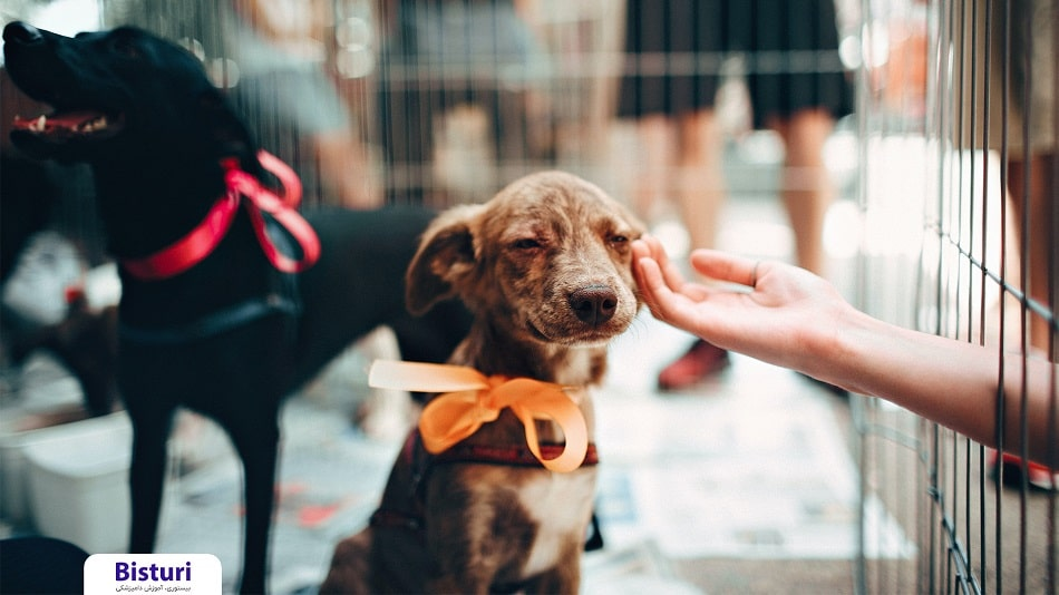 The most common behavioral disorders in dogs - Kind
