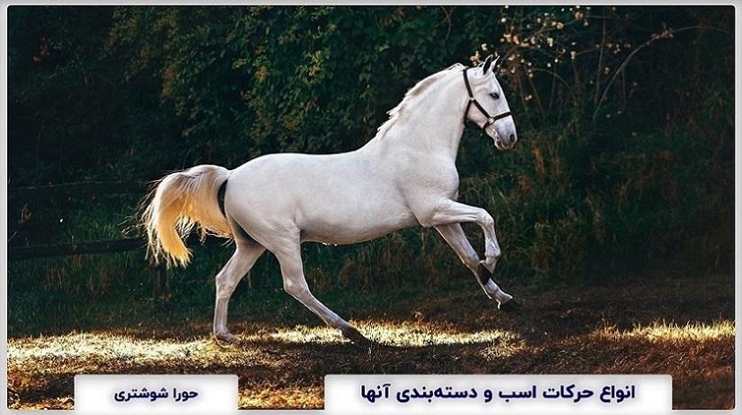 Types Movements Horses