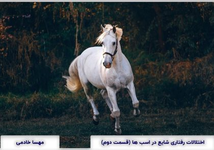 Common Behavioral Disorders in Horses part 2